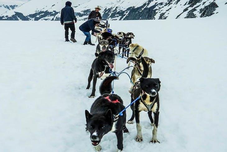 0_new Alaska Dog Sled
