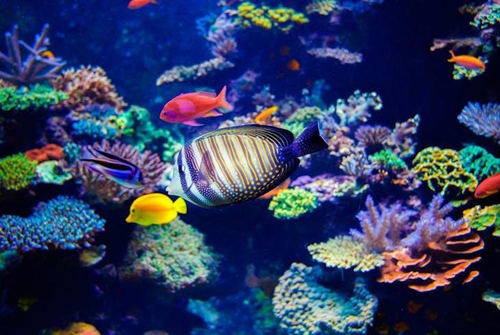 0_new Aquarium