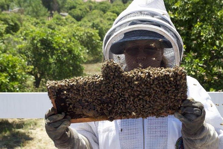 0_new Beekeeping