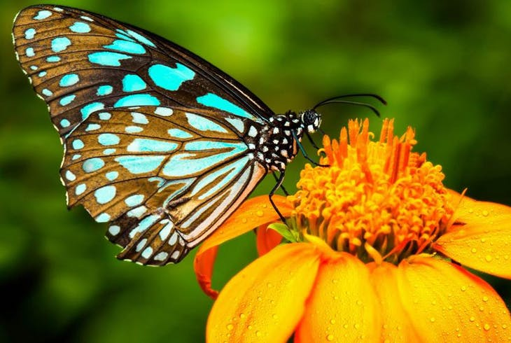 0_new Butterfly
