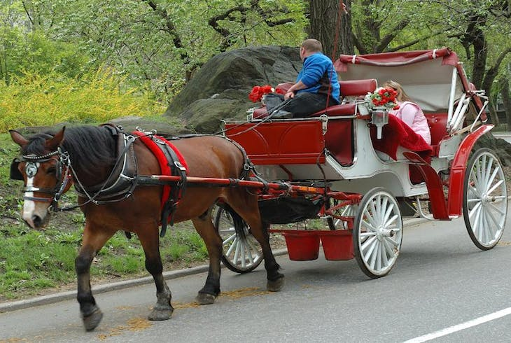 0_new Central Park Horse Carriage