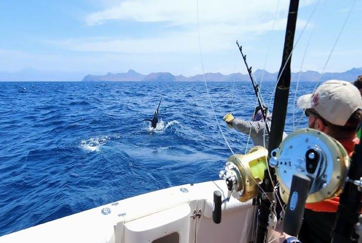 0_new Deep Sea Fishing Warm Weather