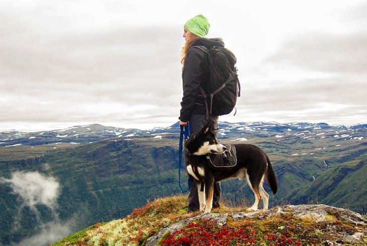 0_new Dog Hiking