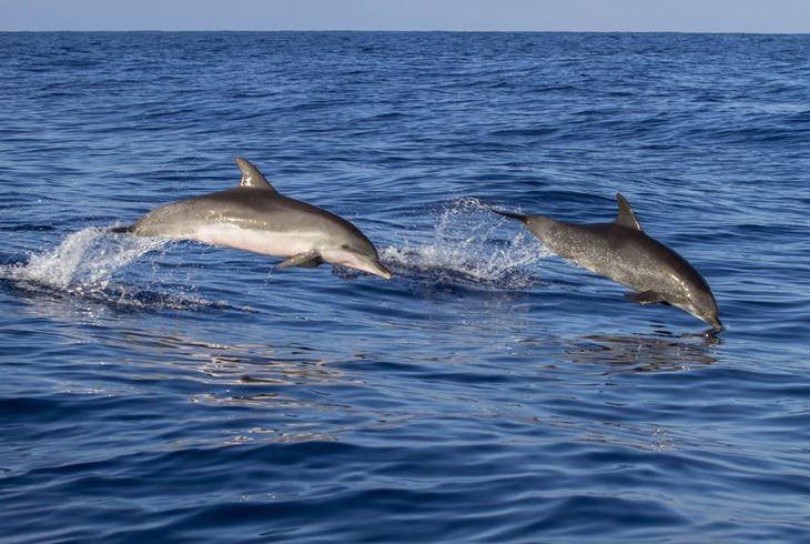 0_new Dolphin Charter