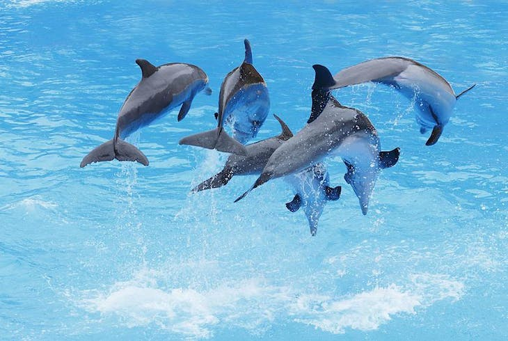 0_new Dolphin Swimming