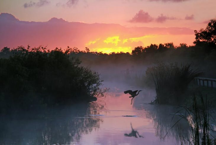 0_new Everglades