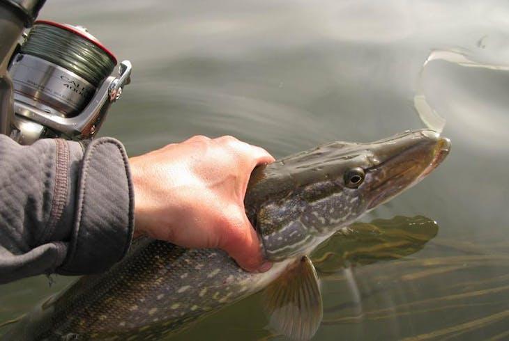 0_new Fishing