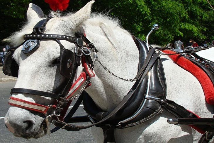 0_new Horse Carriage Times Square