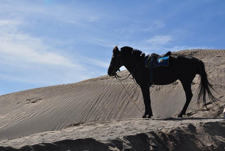 0_new Horseback Riding Desert