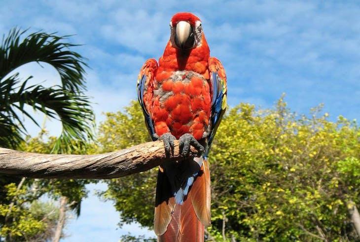 0_new Miami Jungle Island