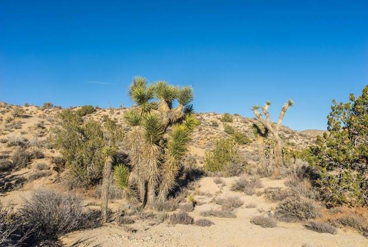 0_new Mojave Desert