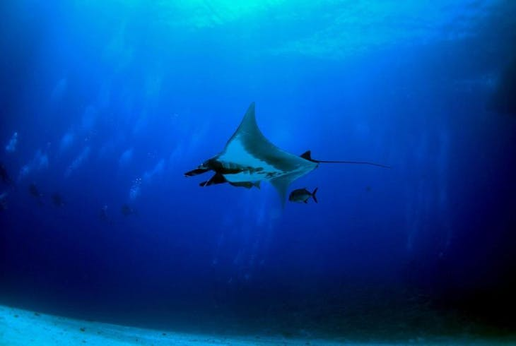0_new Molokini Snorkeling