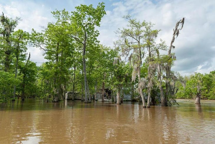 0_new Orleans Swamp