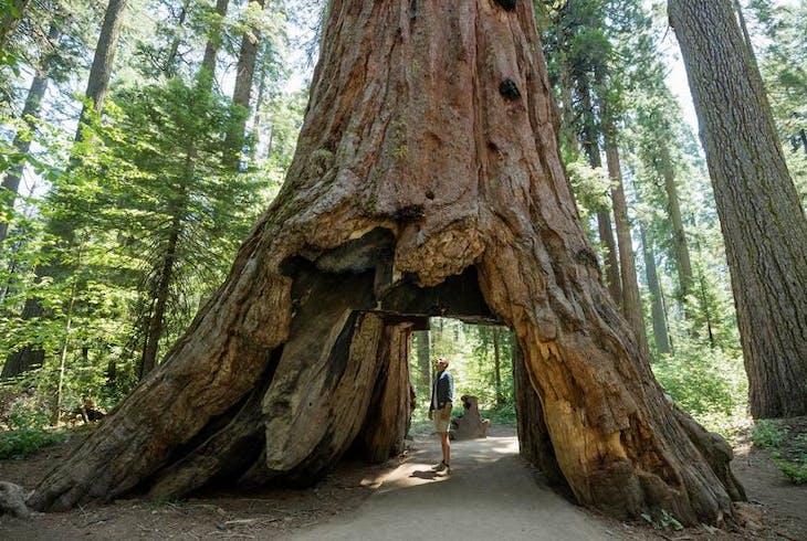 0_new Redwoods
