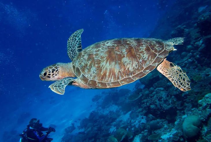 0_new Sea Turtles