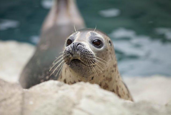 0_new Seals