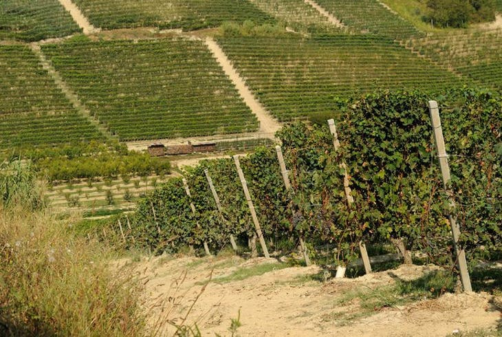 0_new Vineyards