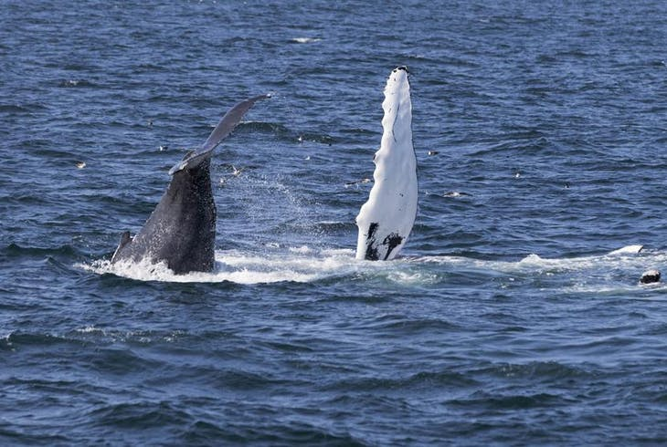 0_new Whale Watch