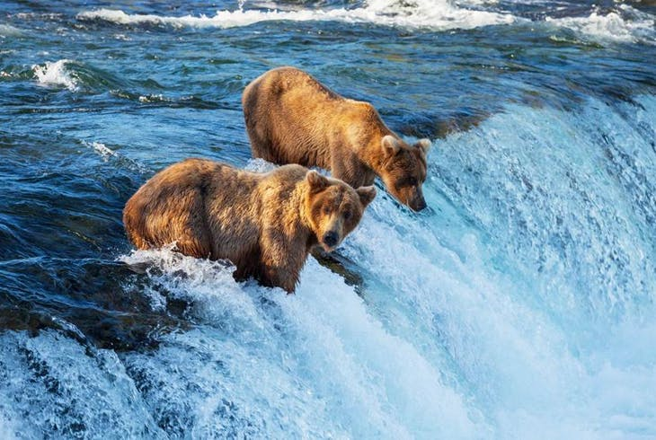 0_new Wildlife Alaska