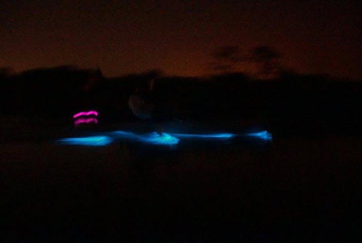 Adventures In Florida Bioluminescence