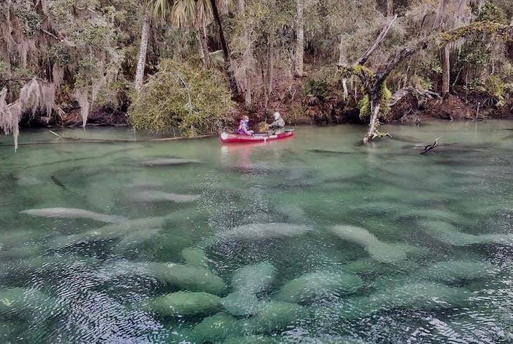Adventures In Florida Manatee Encounter