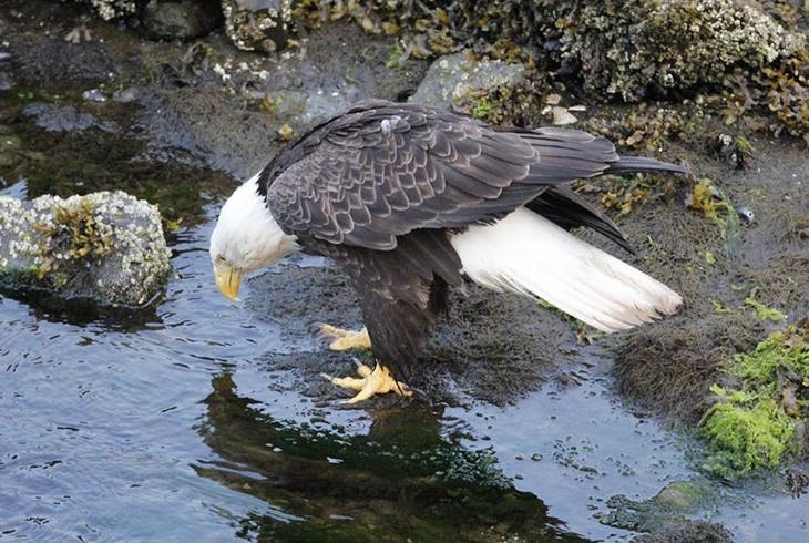 Alaska Amphibious Tours Saltwater Expedition