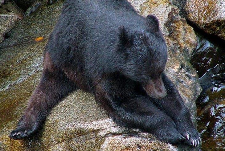 Alaska Waters Anan Bear Wildlife Observatory