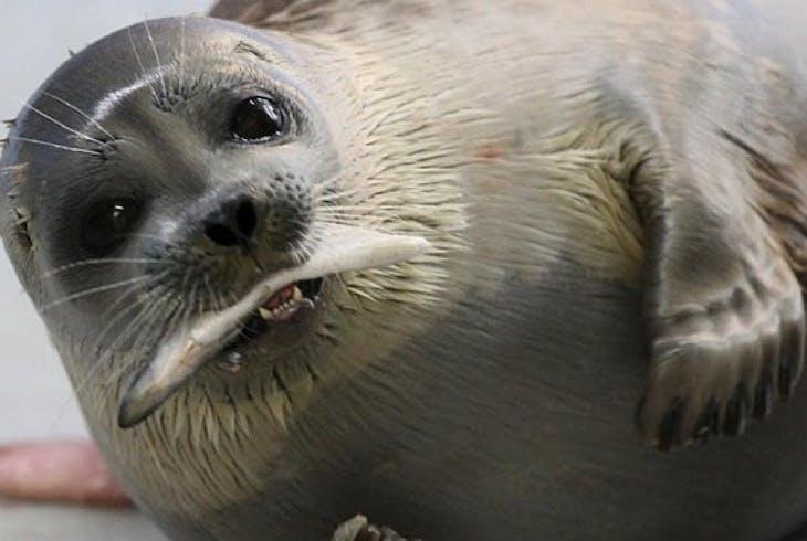 Alaska Sealife Center Marine Mammal Encounter