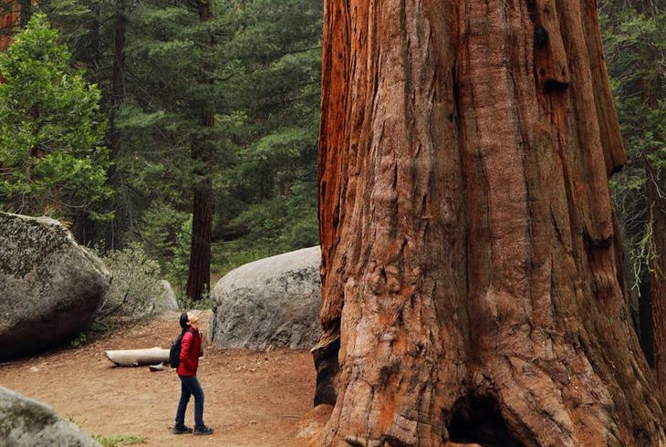 Best Bay Area Tours Redwoods Coast And Sausalito Tour