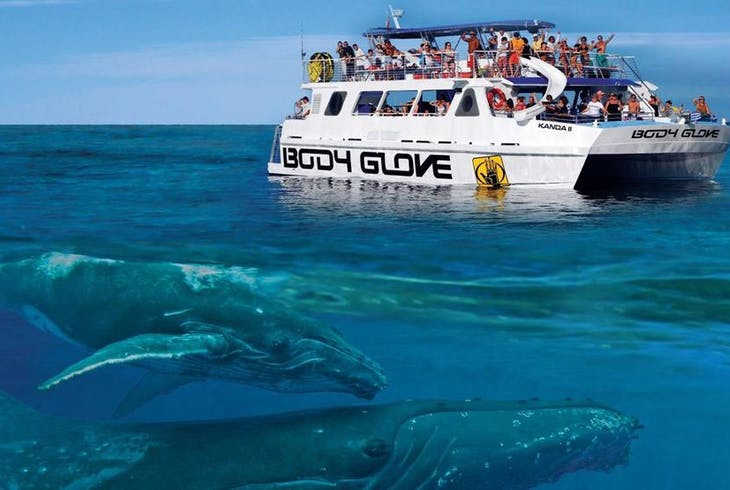 Body Gloves Cruises Whale Watch