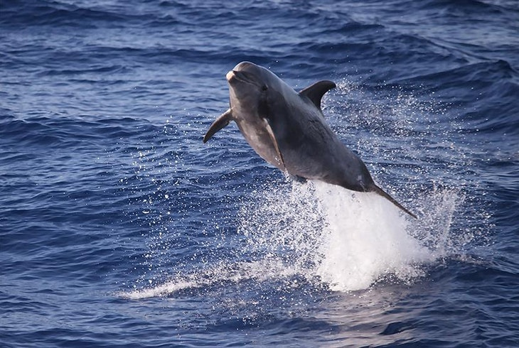 Boss Frogs Quicksilver Lanai Snorkeling Dolphin Encounter