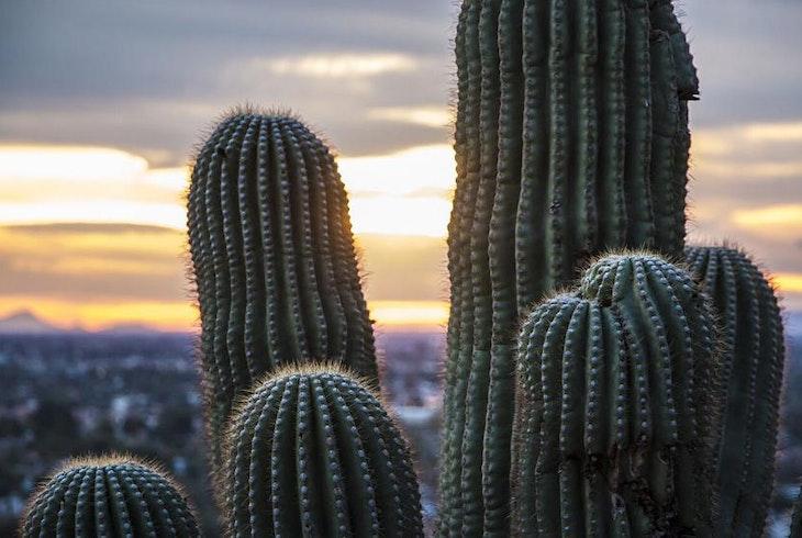 DETOURS AZ Phoenix Scottsdale City Tour