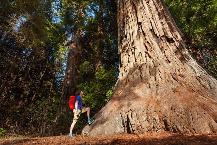 Extranomical Tours Yosemite 1Day Tour