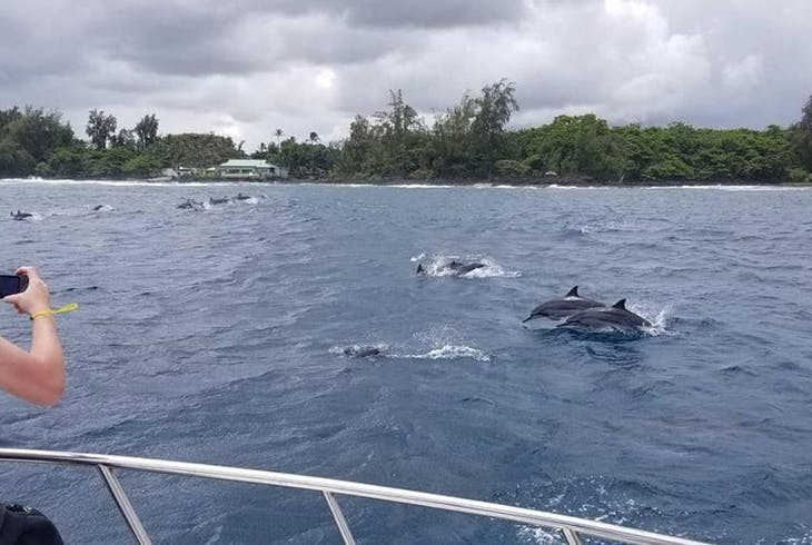 Hilo Ocean Adventures Dolphin Adventure And Tropical Reef Raft Snorkel