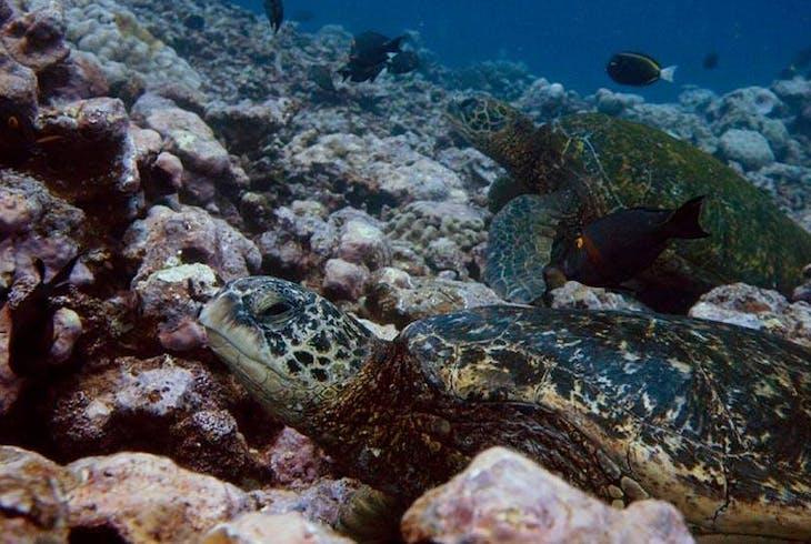 Hilo Ocean Adventures Sea Turtle Cove