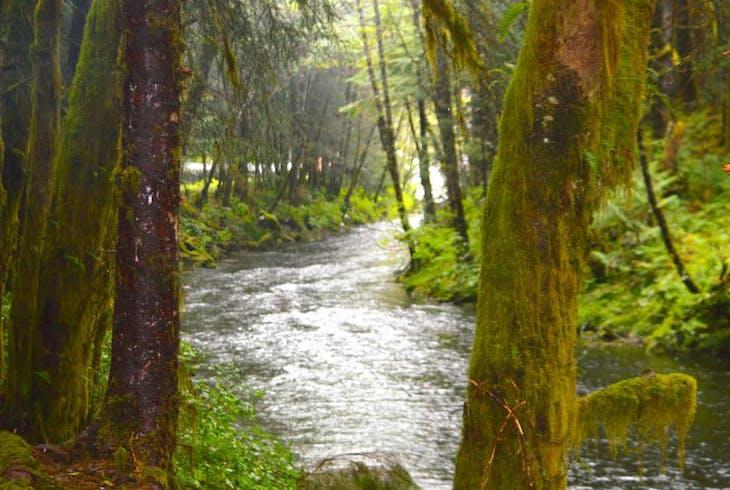 Ketchikan Outdoors Rainforest