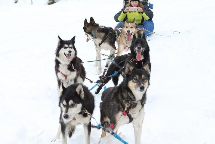 Luna Lobos Dog Sledding Basic Summer Fall Cart Ride