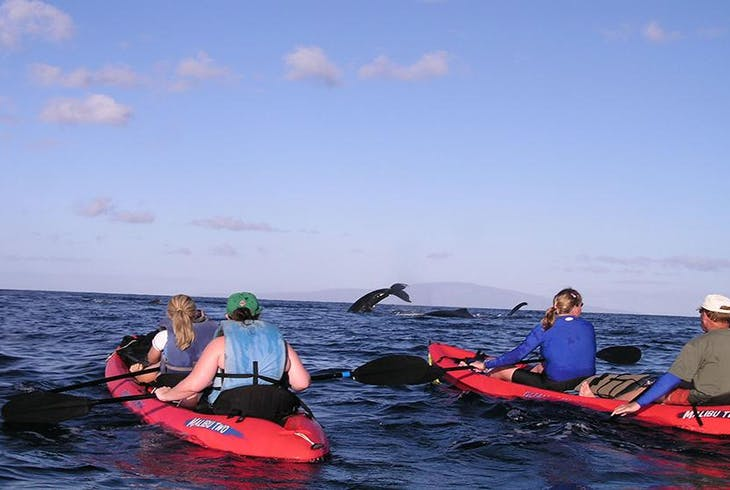 Maui Kayak Adventure Whale