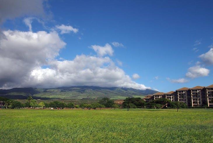 Ride Smart Maui Coffee Farm