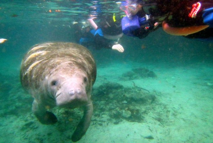River Ventures Manatee Tour Center Daily Manatee Tours