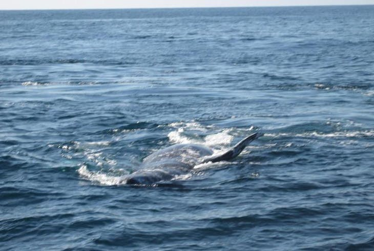 San Diego Sailing Tours Whale Watching
