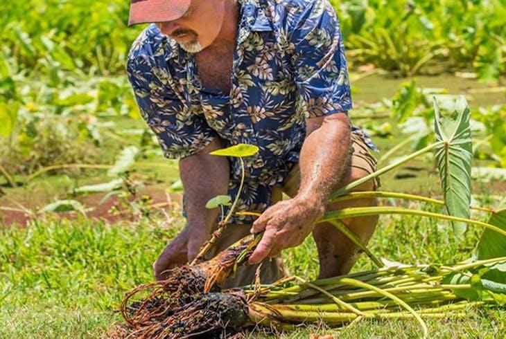 Tasting Kauai Food Tours East Shore