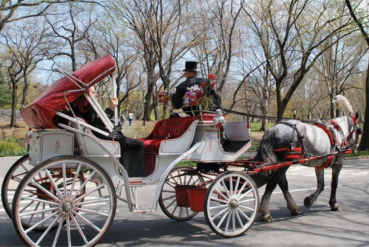 Unlimited Biking NY Central Park Horse And Carriage Tour
