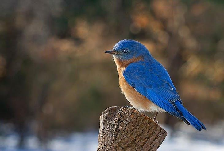 Bird Watching Generic