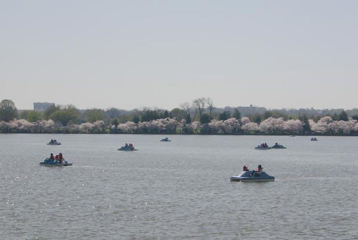 Boat Basin Dc