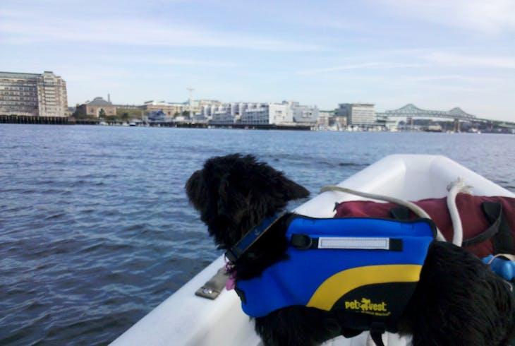 Boston Harbor Boat Rentals 12