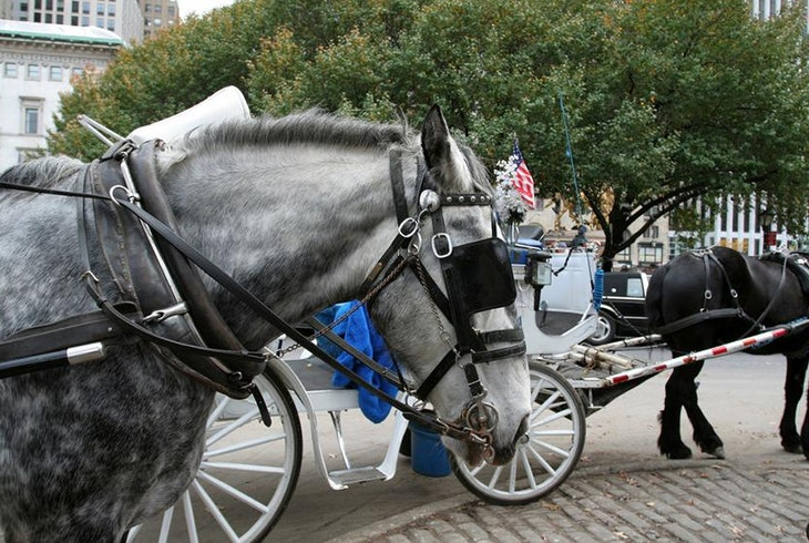 short horse and carriage ride in central park central park sightseeing. Black Bedroom Furniture Sets. Home Design Ideas