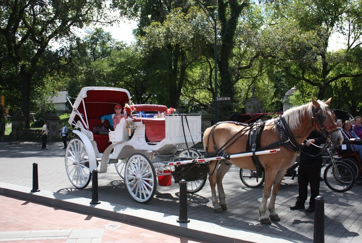 Central Park Horse Carriage