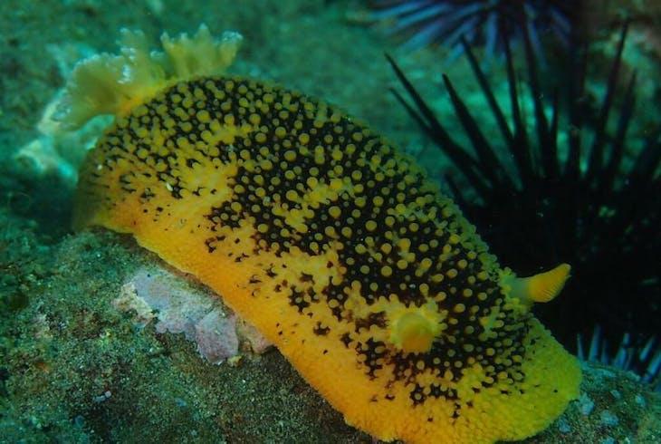 Channel Islands Dive Adventures