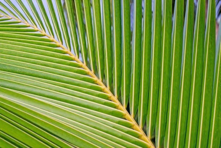 Coconut Leaf Weaving